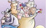 Furto de gado