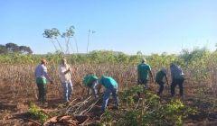 Juiz doa quatro toneladas de mandioca a instituições carentes de Quirinópolis